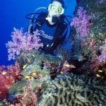Immersioni subacquee su muri di coralli